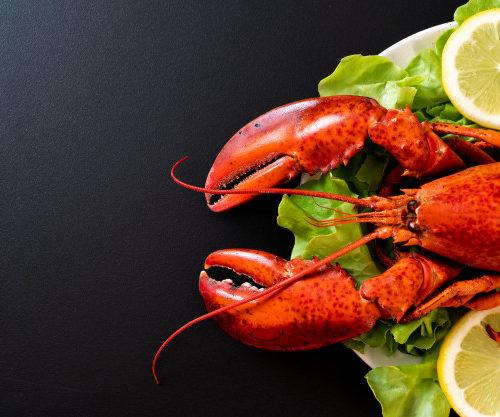 lagosta quitosana